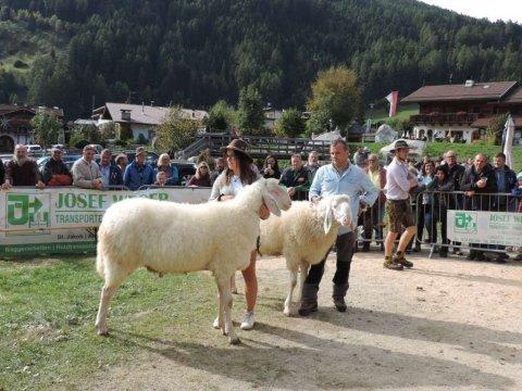 7. Landesjungtierschau in Luttach