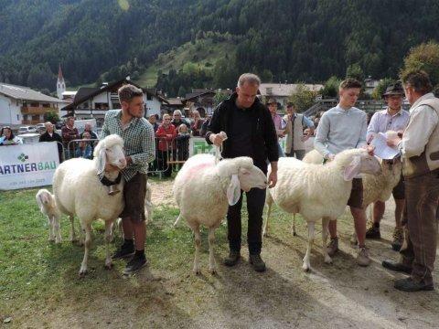 7.-Landesjungtierschau-in-Luttach-3