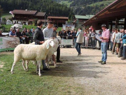 7.-Landesjungtierschau-in-Luttach-4