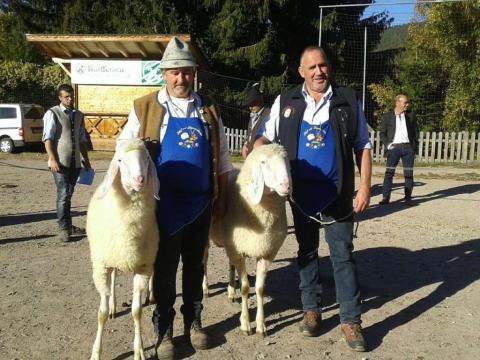 Schaf-und-Ziegenausstellung-des-SZV-Mölten-1