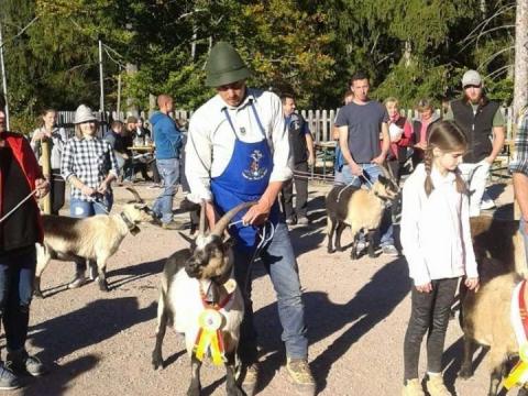 Schaf-und-Ziegenausstellung-des-SZV-Mölten-10
