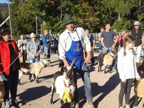 Schaf-und-Ziegenausstellung-des-SZV-Mölten-11