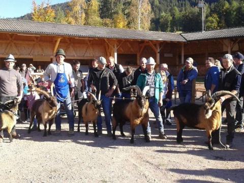 Schaf-und-Ziegenausstellung-des-SZV-Mölten-4